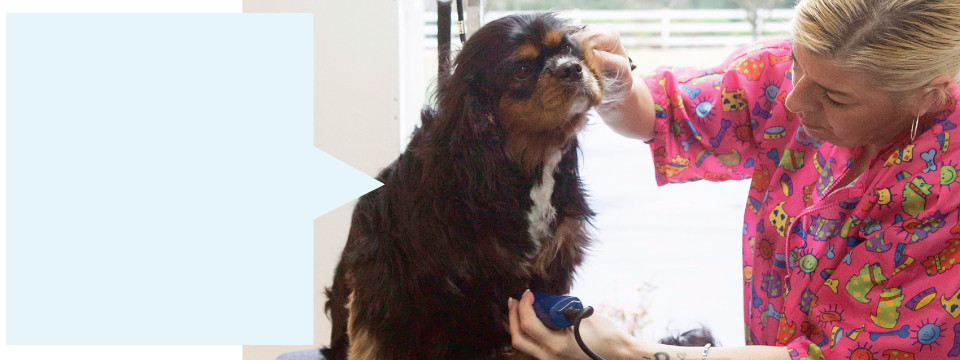 Dog Grooming at Doggy Haven Resort near Seattle