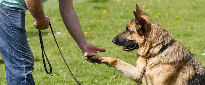 individual dog training