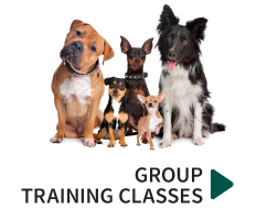 training-group-training
